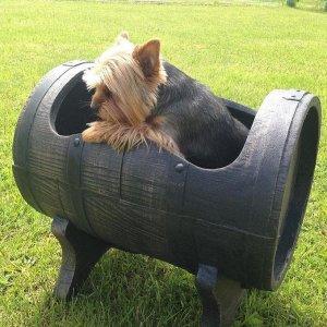 Salsa L ruukku ja pieni koira Tynnyrimies - tuotteemme ovat monikäyttöisiä!